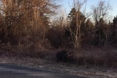 Forestry Mulching - Chambersburg, PA