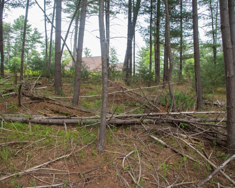 Forestry Mulching & Land Clearing - Petersburg, PA
